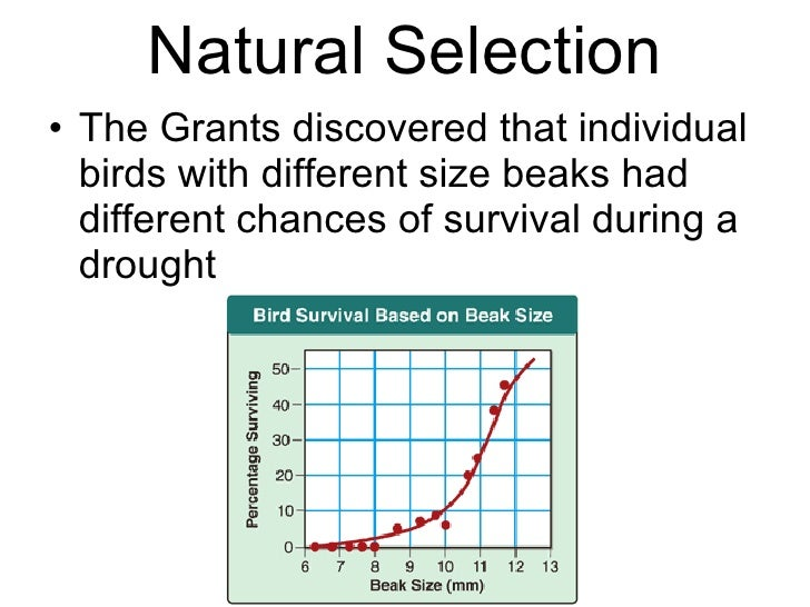 Difference Between Speciation And Natural Selection