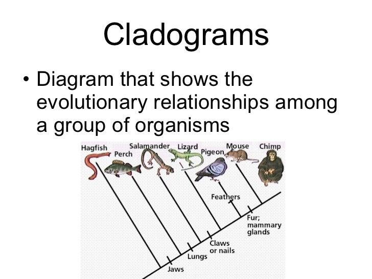 Blank Cladogram Worksheet Biology - chp 18 - classification ...