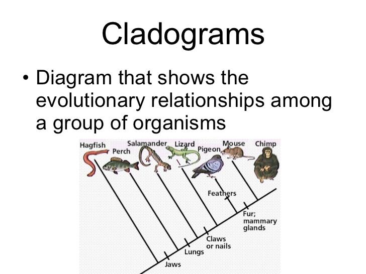 Cladogram Worksheet Answers - Gamersn