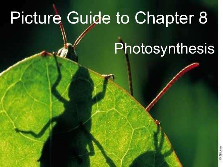 Picture Guide to Chapter 8 Photosynthesis