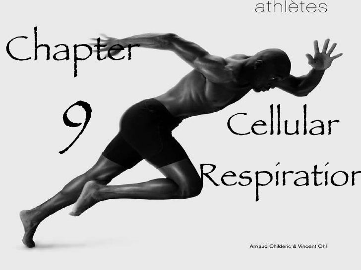 Biology - Chp 9 - Respiration - PowerPoint