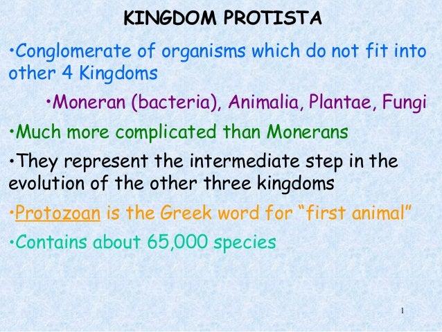 Kingdom Protista Examples