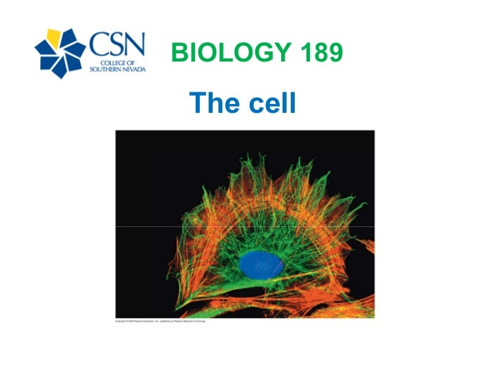 BIOLOGY 189 The cell