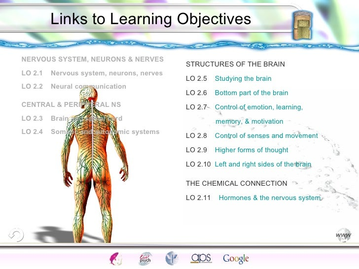 <ul><li>NERVOUS SYSTEM, NEURONS & NERVES </li></ul><ul><li>LO 2.1  Nervous system, neurons, nerves </li></ul><ul><li>LO 2....