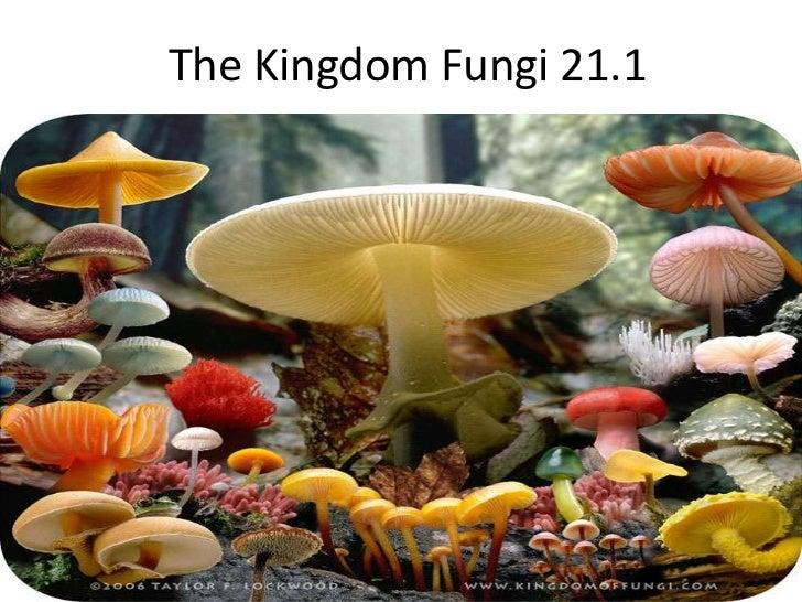 The Kingdom Fungi 21.1<br />