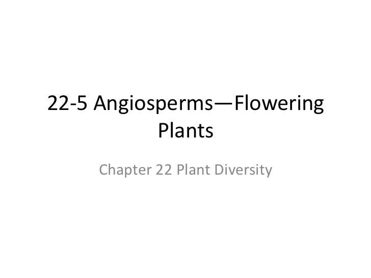 22-5 Angiosperms—Flowering Plants<br />Chapter 22 Plant Diversity<br />