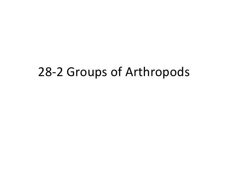 Biology 28 2 groups of arthropods