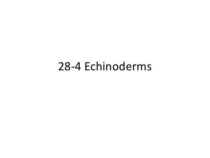 Biology 28 4 echinoderms