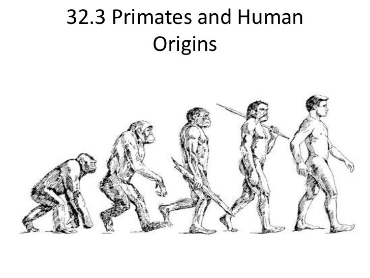 32.3 Primates and Human Origins<br />