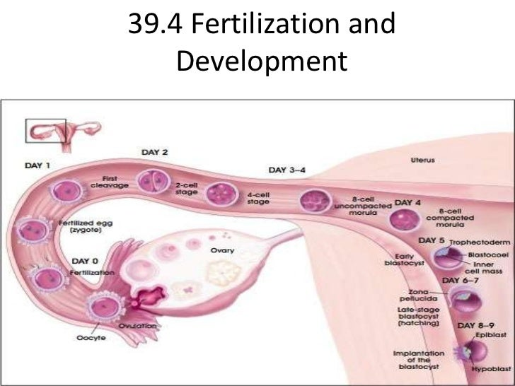 Biology 39.4