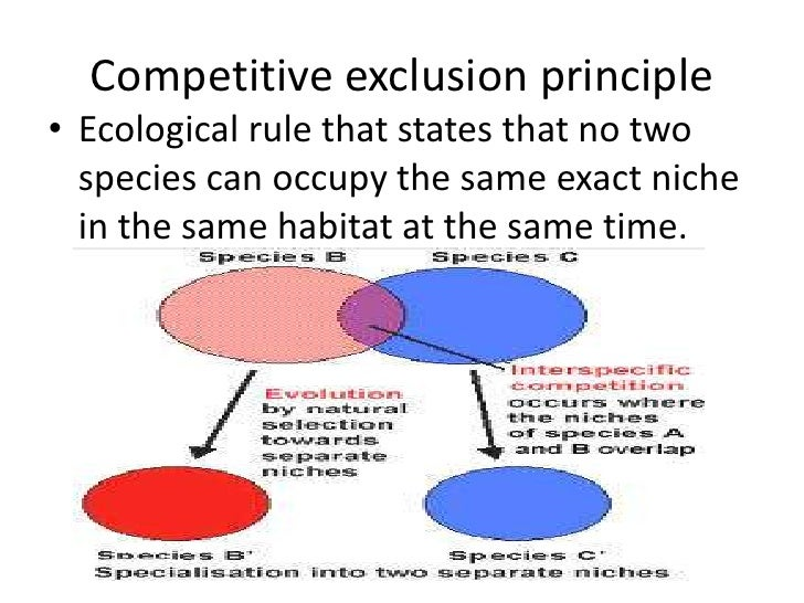 puritan society and principle of exclusion Principle of inclusion-exclusion the principle of inclusion-exclusion (abbreviated pie) provides an organized method/formula to find the number of elements in the.