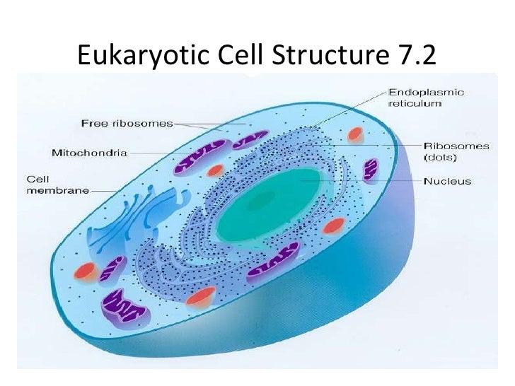 Biology 7 2