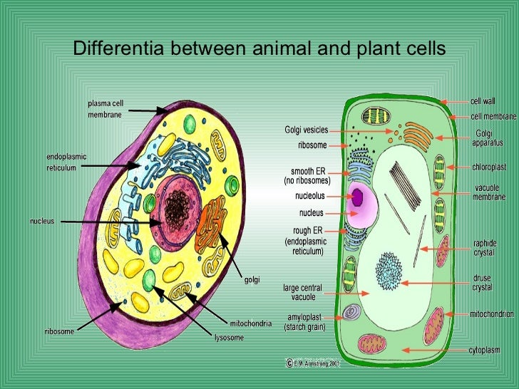 Plant cell parts and functions list