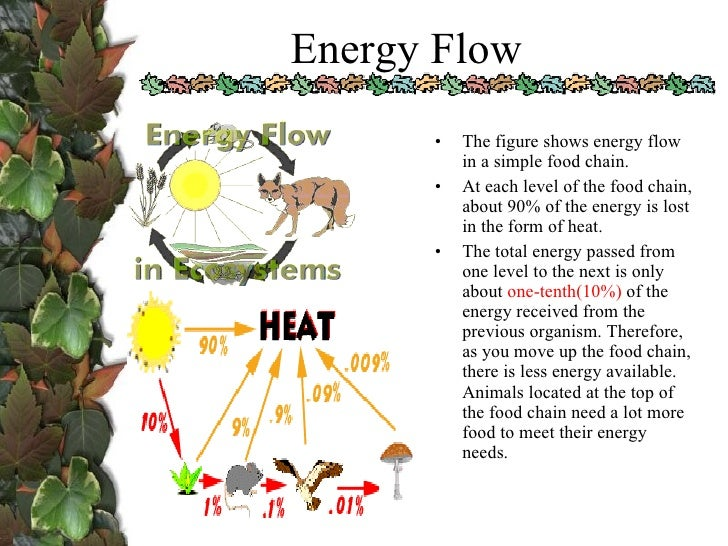 biology ecology project Ecology is a large theme, and often not given full coverage in a biology class due to time constraints below are some basic lessons on ecology and environmental science.