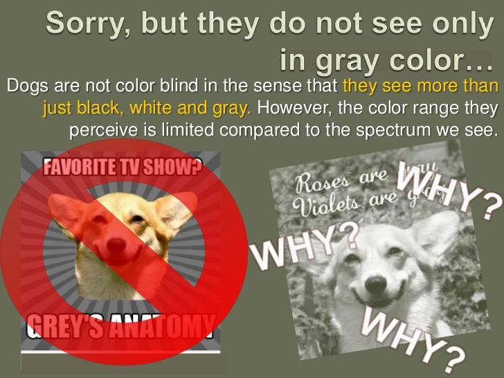 color blindness research paper Free blindness papers, essays, and research papers  - color blindness many people refer to problems with one's ability to see color as color .