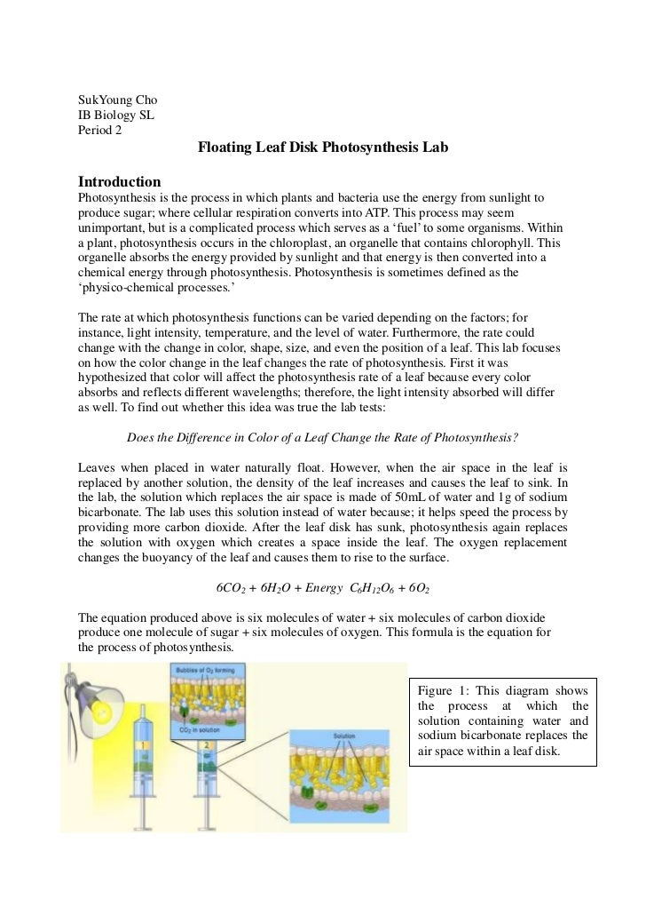 rate pf photosynthesis lab report leaf discs co2 Photosynthesis lab essay lab report: photosynthesis is the process by which green plants and some other organisms use sunlight to synthesize nutrients from carbon dioxide and water photosynthesis in to measure the effect of light intensity on the rate of photosynthesis in leaf discs.