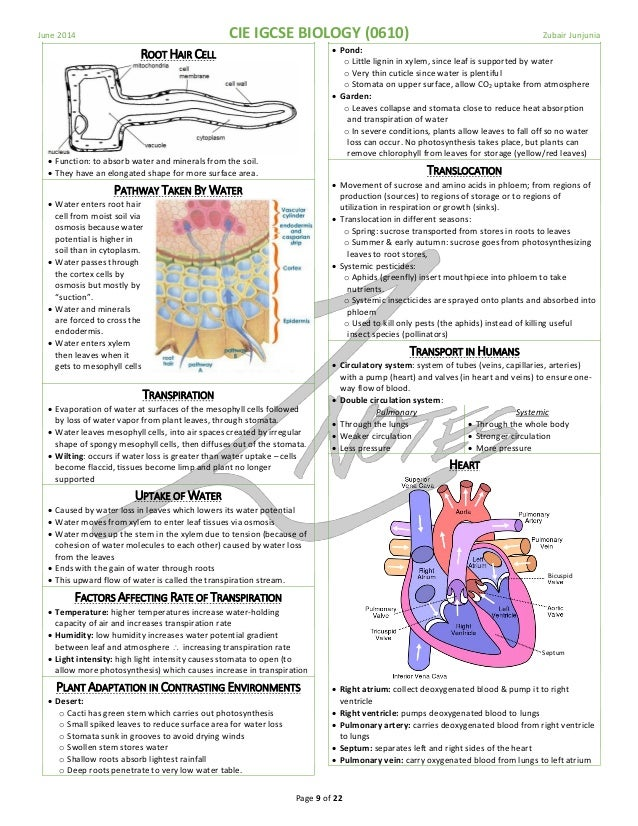 igcse biology notes Here is a pdf file with all biology notes for you to download click on the pop-out button on the upper right corner of the pdf file to have full view or click here.