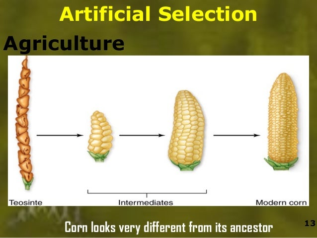 Plant Examples Of Natural Selection