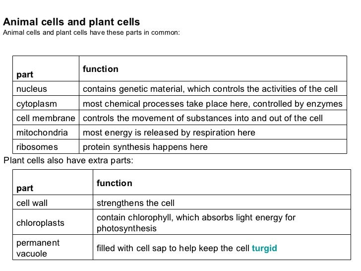 the definitions of the different parts of the cell structure in biology (you can identify parts of the cells by running your mouse over different structures the names appear in the box above the list of organelles the names of the organelles are links to definitions.