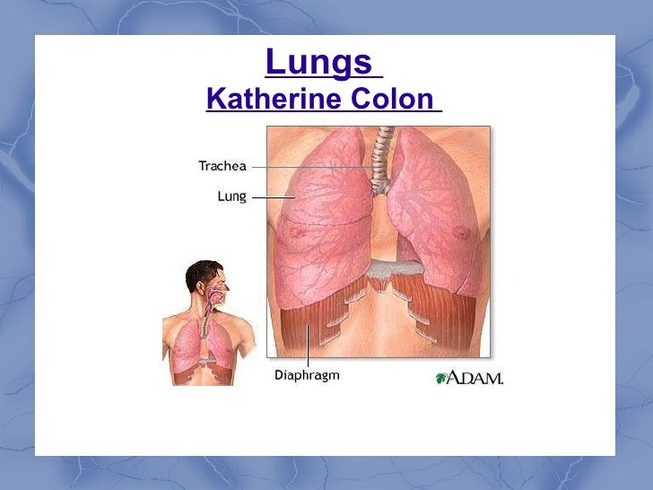 Lungs  Katherine Colon