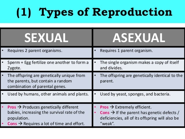 Two types of asexual reproduction photo 28