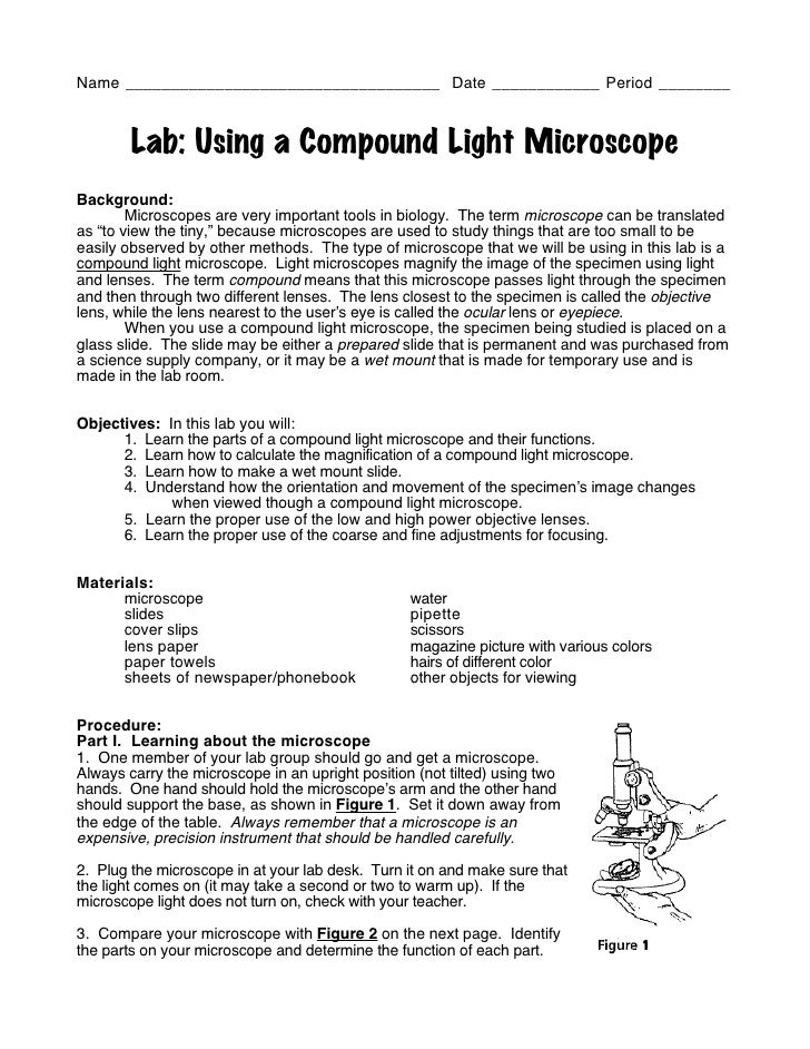 Name ___________________________________ Date ____________ Period ________        Lab: Using a Compound Light MicroscopeBa...