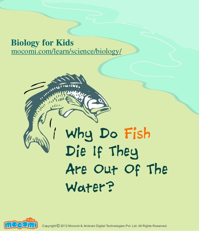 Why do Fish Die if They Are Out of the Water - Mocomi.com