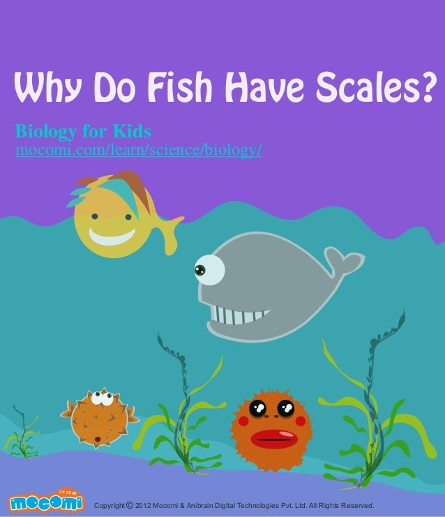 why do fish have scales