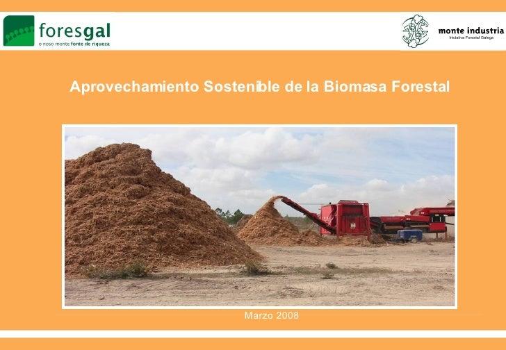 Biomasa Foresgal 08