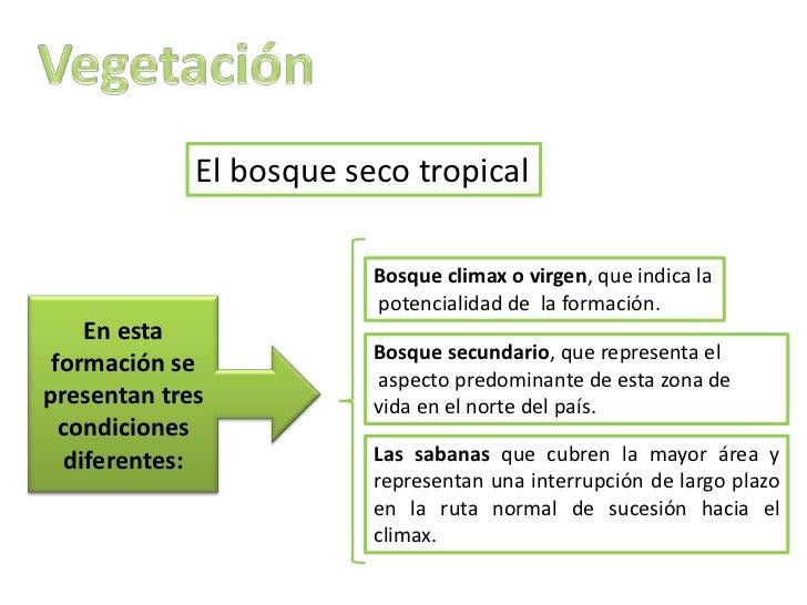 El bosque seco tropical                         Bosque climax o virgen, que indica la                         potencialida...