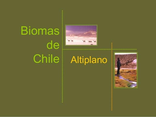 AltiplanoBiomasdeChile