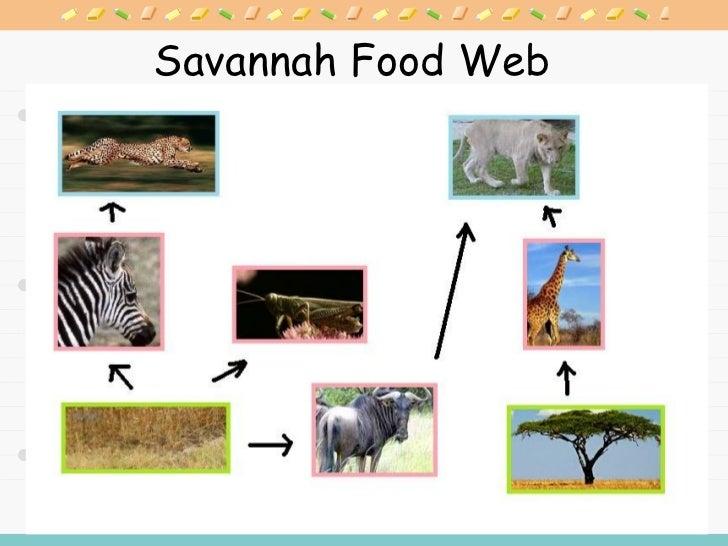Savanna Ecosystem Food Chain