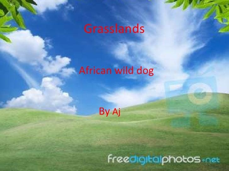GrasslandsAfrican wild dog    By Aj