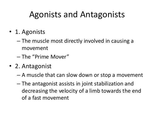 Antagonist definition anatomy