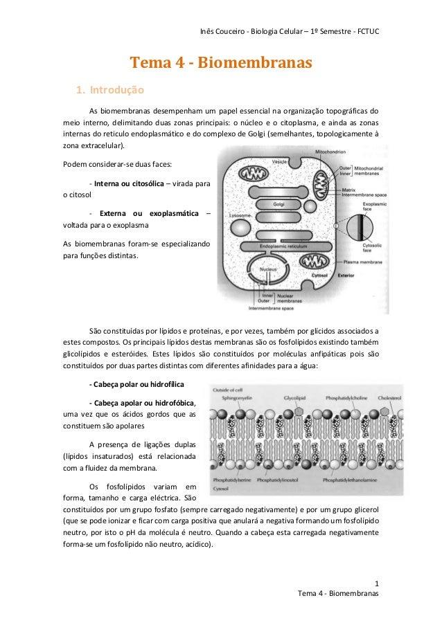 Inês Couceiro - Biologia Celular – 1º Semestre - FCTUC                    Tema 4 - Biomembranas    1. Introdução        As...