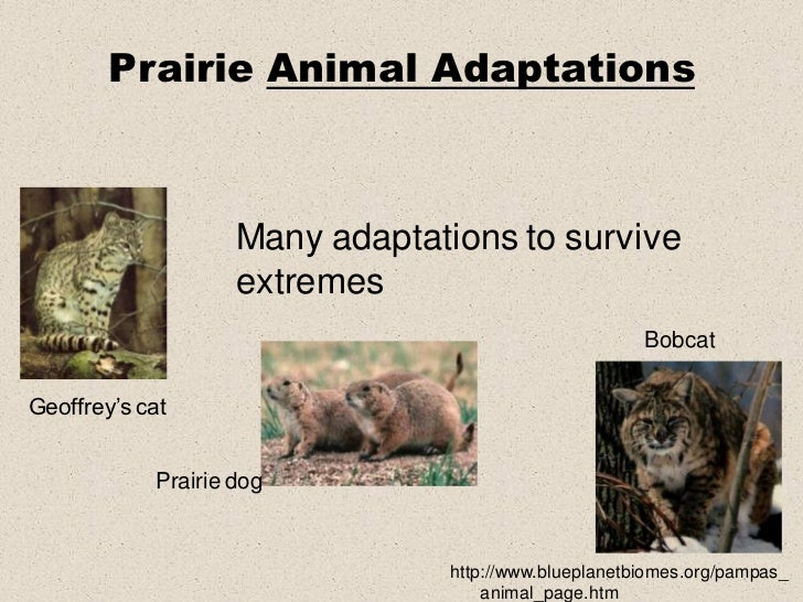 an analysis of the survival and adaption in a piece of steak and tracks Clinton richard dawkins frs the ecology and behaviour of animals whose welfare and survival may be endangered by narration on two tracks:.