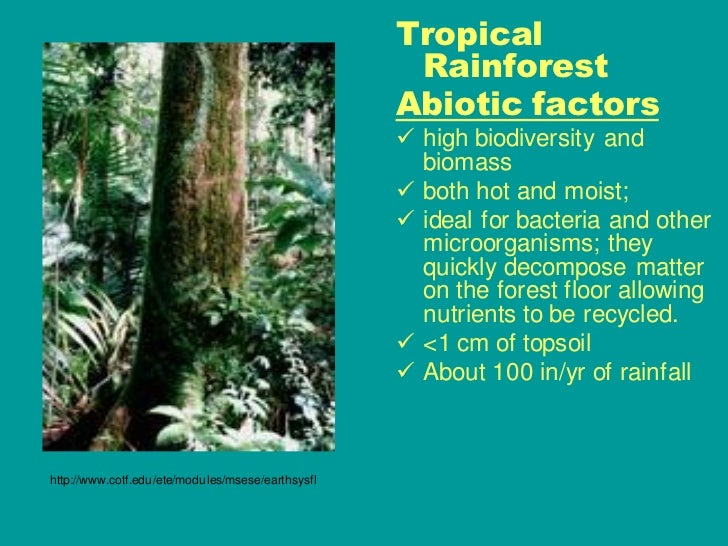 the features of the tropical rain forest biome Recent videos autoplay 09-07-18 movalley morning broadcast 0302  describe the family visual presentation 0302 describe the family visual  present.