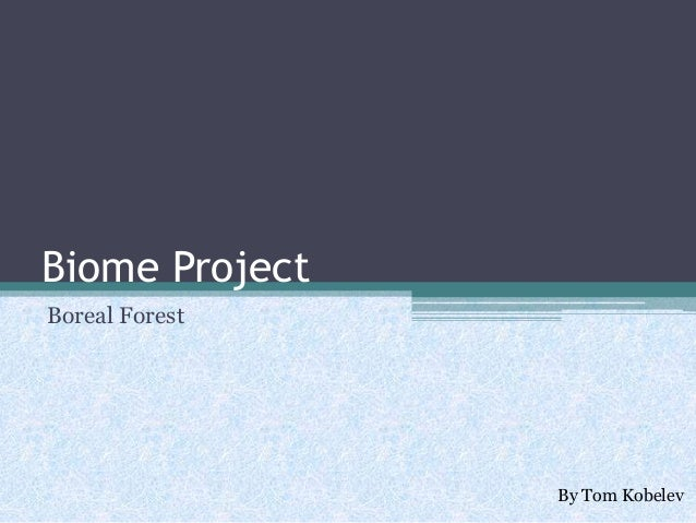 Biome Project Boreal Forest  By Tom Kobelev