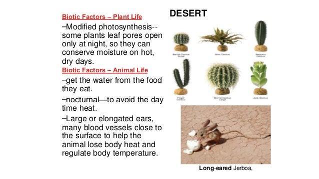 Abiotic and Biotic Factors  The Sahara Desert