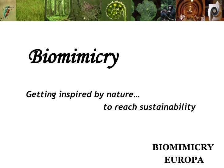 Biomimicry Getting inspired by nature… to reach sustainability BIOMIMICRY  EUROPA