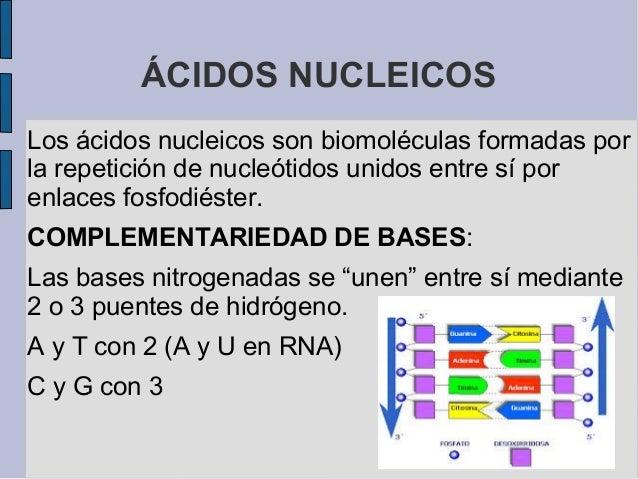 Los Acidos ácidos Nucleicos Los ácidos
