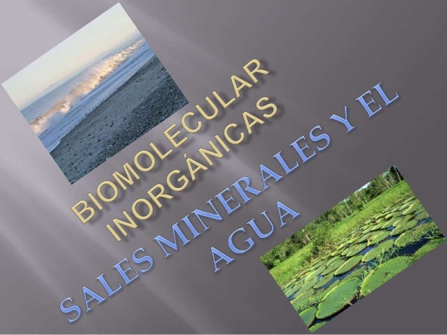   El agua pura es un líquido inodoro e insípido. Tiene un matiz azul, que sólo puede detectarse en capas de gran profundi...