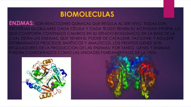 BIOMOLECULAS ENZIMAS: SON REACCIONES QUÍMICAS QUE REGULA AL SER VIVO, TODAS SON  PROTEÍNAS GLOBULARES CADA CÉLULA Y CADA T...