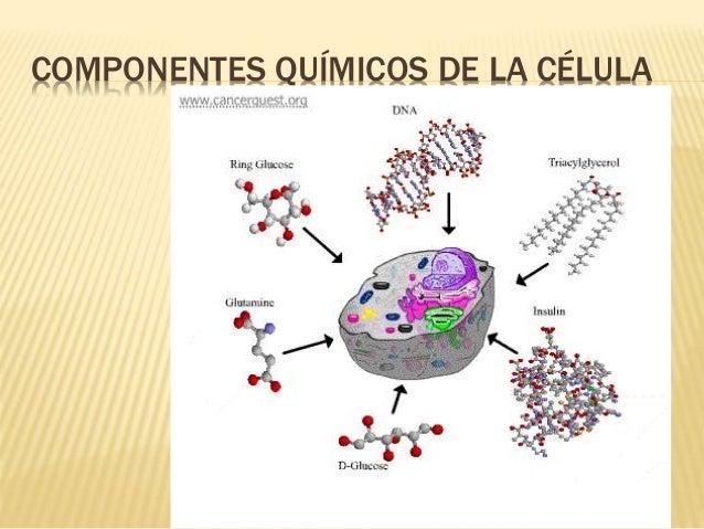 COMPONENTES QUÍMICOS DE LA CÉLULA