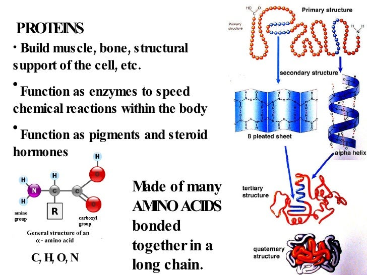 steroid function in body