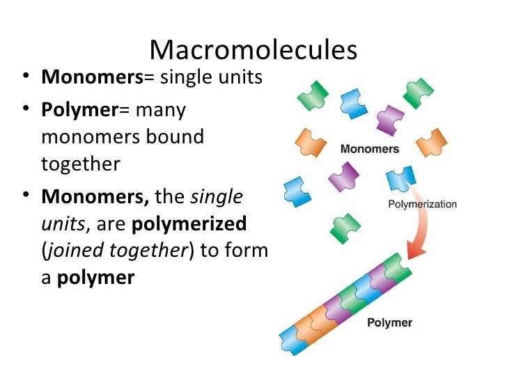 proteins monomers and polymers relationship