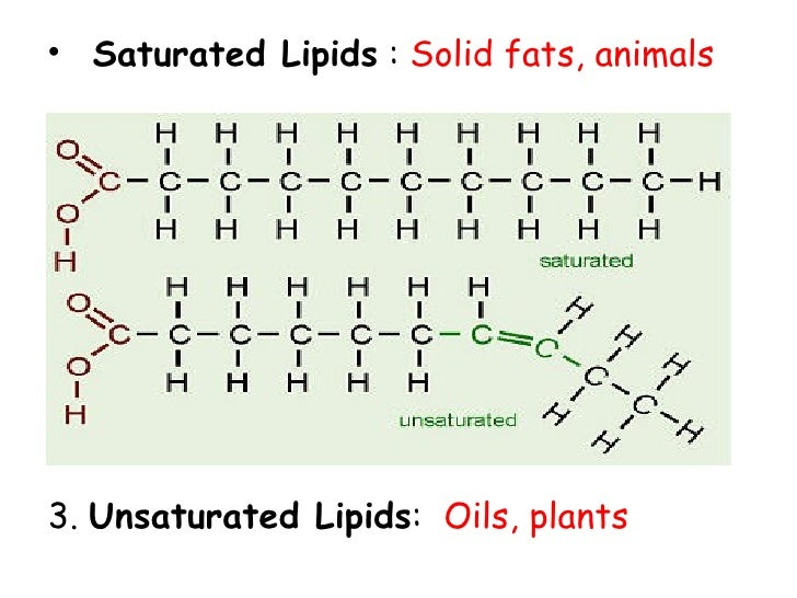 structure of fats phospholipids and steroids
