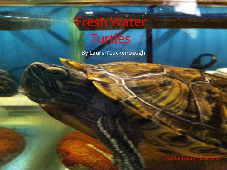 Fresh Water   TurtlesBy Lauren Luckenbaugh                        (Luckenbaugh,sheldon)
