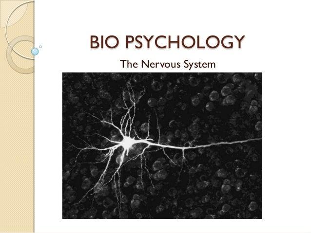 BIO PSYCHOLOGY  The Nervous System