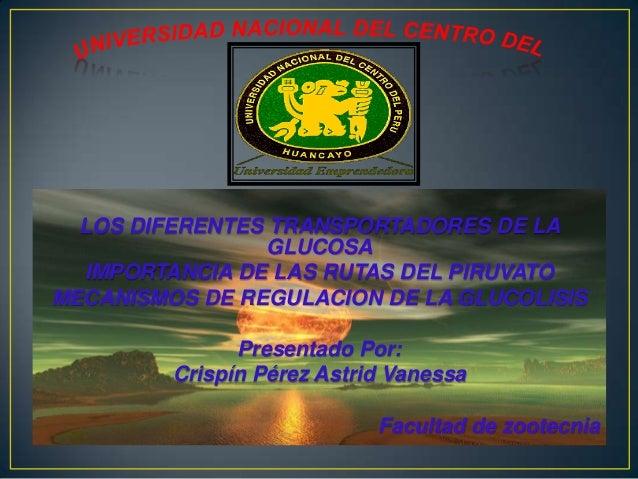LOS DIFERENTES TRANSPORTADORES DE LA GLUCOSA IMPORTANCIA DE LAS RUTAS DEL PIRUVATO MECANISMOS DE REGULACION DE LA GLUCOLIS...